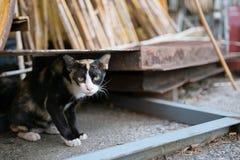 Рассеянный кот на районе конструкции Стоковые Изображения
