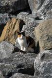 Рассеянный кот сидя в парке Стоковые Изображения RF