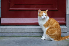 Рассеянный кот сидя перед красной дверью Стоковые Изображения RF