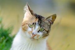 Рассеянный кот смотря камеру Стоковое фото RF