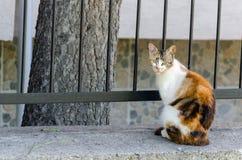 Рассеянный кот смотря камеру Стоковые Фотографии RF