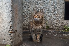 Рассеянный кот снаружи стоковые изображения