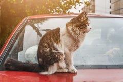 Рассеянный кот снаружи стоковое фото rf