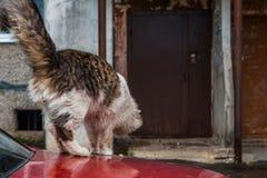 Рассеянный кот снаружи стоковые фото