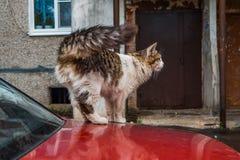 Рассеянный кот снаружи стоковые изображения rf