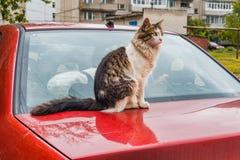 Рассеянный кот снаружи стоковое изображение