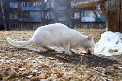 Рассеянный кот! Стоковые Фото