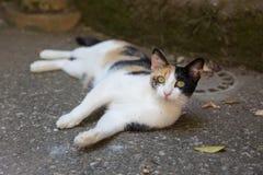 Рассеянный кот Стоковое Изображение