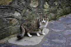 Рассеянный кот Стоковая Фотография
