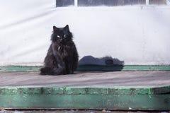 Рассеянный кот Стоковая Фотография RF