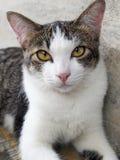 Рассеянный кот Стоковое Изображение RF