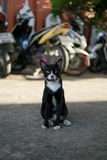 Рассеянный кот Стоковые Фотографии RF
