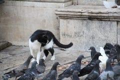 Рассеянный кот Стоковые Изображения