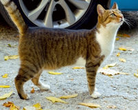 Рассеянный кот Стоковое Фото