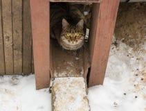 Рассеянный кот Стоковое фото RF