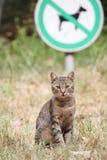 Рассеянный кот tabby сидит на лужайке Стоковое фото RF