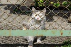 Рассеянный молодой белый кот стоковое фото