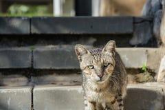 Рассеянный унылый кот Стоковое Изображение