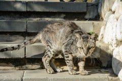 Рассеянный унылый кот Стоковая Фотография