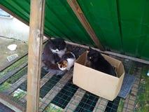 3 рассеянных бездомных кота на решетке под зеленой крышей Стоковые Фотографии RF