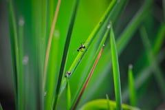 Рассказ муравьев стоковое изображение