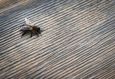 Расслабляющая пчела на камне Стоковые Изображения RF