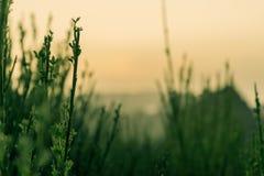 Расслабляющая тропическая трава горы с заходом солнца на заднем плане стоковое изображение rf