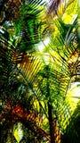 расслабляющие листья пальмы Стоковое Изображение RF