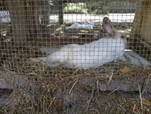 Расслабляющий кролик зайчика Стоковые Фотографии RF