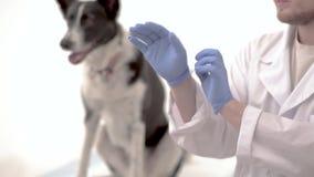 Рассматривать в клинике ветеринара видеоматериал