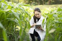 Рассматривать инженера женщины биотехнологии и рекордные лист завода данных для заболевания стоковая фотография rf