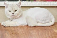 Расстроенный кот на таблице Стоковая Фотография