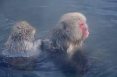 Расслабляющая обезьяна - изображение запаса Стоковые Фотографии RF