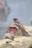 Расслабляющая обезьяна - изображение запаса Стоковые Изображения