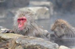 Расслабляющая обезьяна - изображение запаса Стоковая Фотография