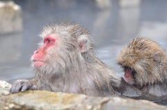 Расслабляющая обезьяна - изображение запаса Стоковые Фото