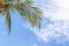 Расслабляющая точка зрения из-под кокосовой пальмы с ба голубого неба Стоковые Изображения