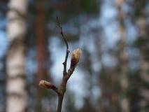 Растворите листья дерева стоковое изображение rf