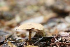 Растет сиротливый несъедобный гриб Стоковая Фотография RF