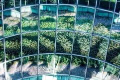 Растительность Варшавы Стоковое Изображение