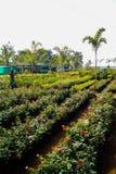Растительность в питомнике стоковые фото
