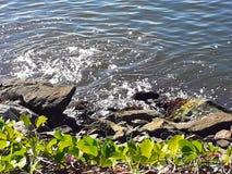 Растительность залива Guanabara стоковые фото