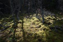 Растительность леса Стоковая Фотография