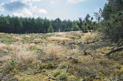 Растительность леса Стоковое Фото