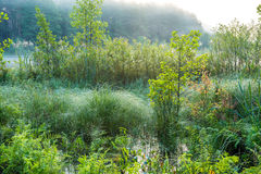Растительность болота Стоковое Изображение