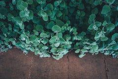 Растительность в парке Стоковые Изображения