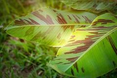 Растительность джунглей при концепция световых лучей показывая горячее солнце и греет Стоковые Фото