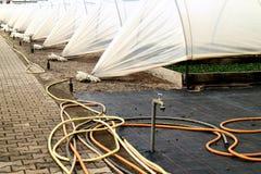 Растительность завода Стоковая Фотография RF