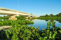 Растительность на речном береге и длинном мосте Стоковые Фотографии RF