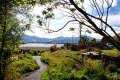 Растительность на Portobello Стоковые Изображения